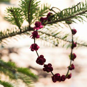 oronita flori rosu inchis