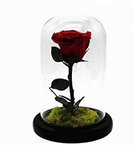 trandafiri_criogenati